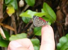 vol papillon2