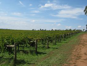 Mes diverses aventures en Fruit picking Australie