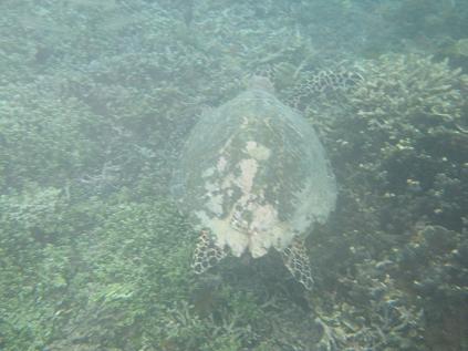 Gili island, les iles en Indonésie!
