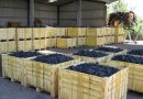 Mes salaire fruit picking en Australie