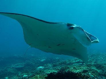 Ou aller plonger à Bali ?