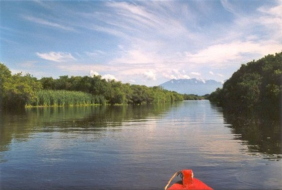 mangrove-monterrico